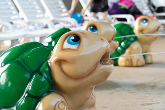 /uploads/2020/01/23/5e29cc288c518Shannon-Turtles.jpg